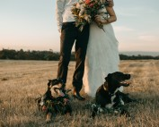 Two dogs with a couple at a wedding - thinking-of-having-your-dog-at-your-wedding