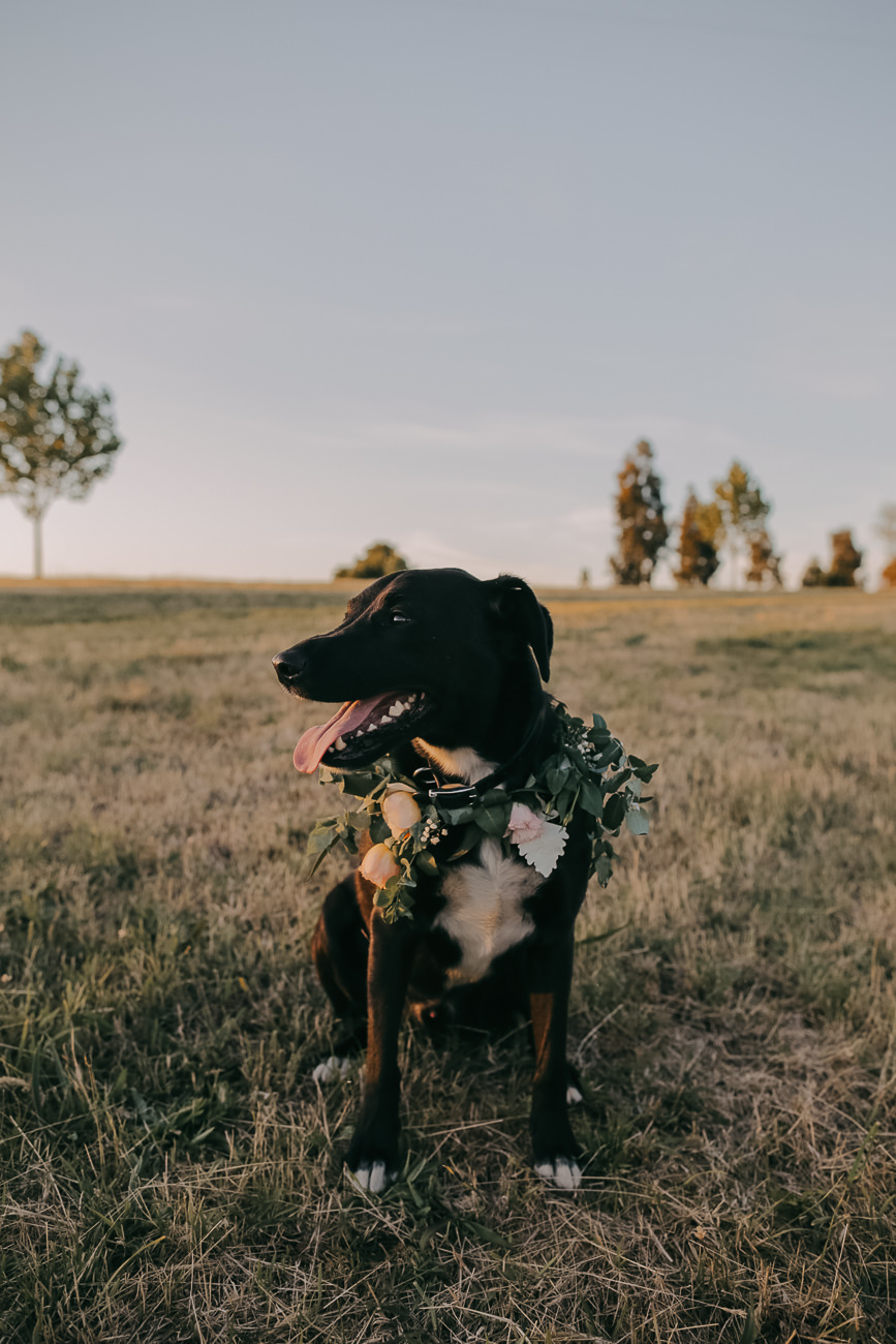 Dog at a wedding - thinking-of-having-your-dog-at-your-wedding