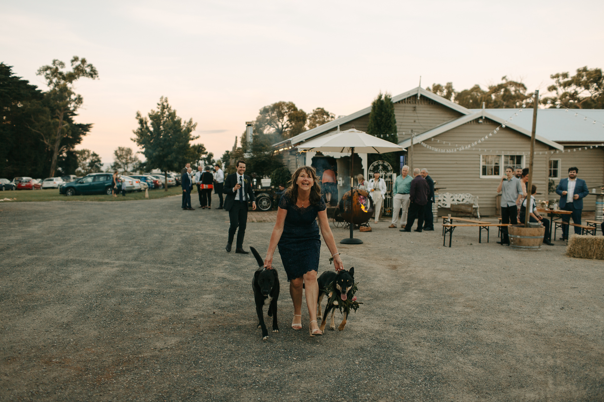 Two dogs at a wedding - thinking-of-having-your-dog-at-your-wedding?